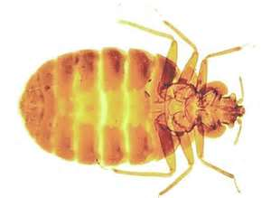 bed bug control for fresno