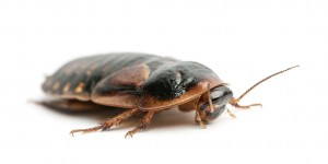 cockroach control for fresno